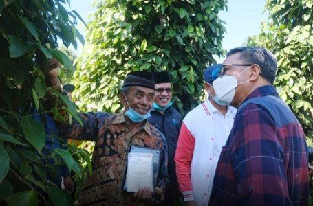 Nurdin Abdullah saat mengunjungi Kebun Merica di desa bantilang