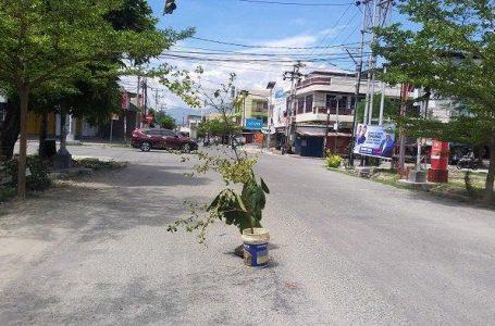 Warga tanam pohon di jalan yang berlubang