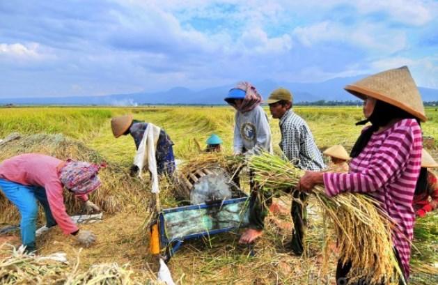 Serapan Hasil Panen Petani di Luwu Terkendala, ASN Bisa Diarahkan Beli Beras di Bulog